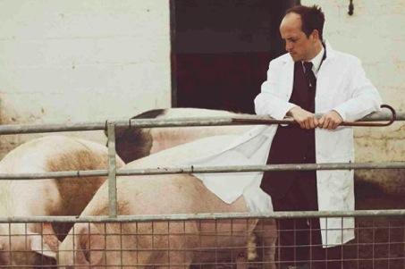 One pig жизнь замечательной свиньи